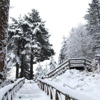 Un giro ai Giganti della Sila sotto la neve