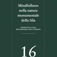 Mindfulness nella natura monumentale della Sila